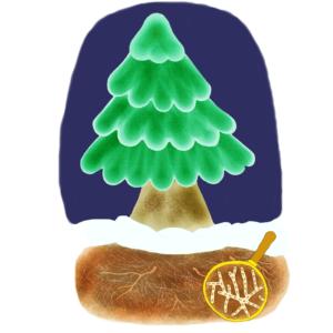 Christmas tree and mycorrhizal fungus